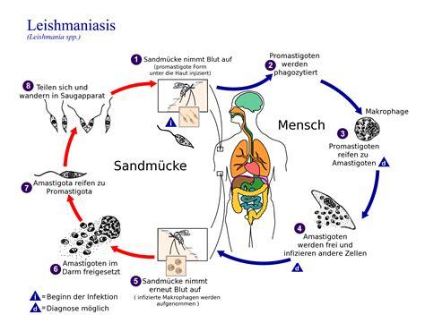 Magen, darm -Grippe (Gastroenteritis) Meine Gesundheit