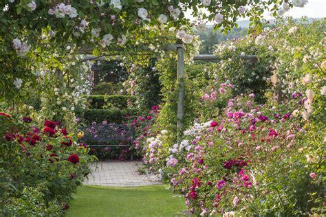 david garden david austin rose talk squire s milford sat 11th july 4 15pm kavanagh communications