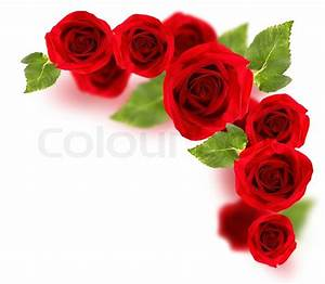 Fresh red roses border isolated on white background ...