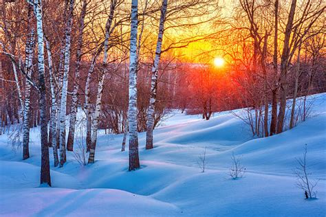 Free Winter Picture by Best Winter Stock Photos Pictures Royalty Free Images