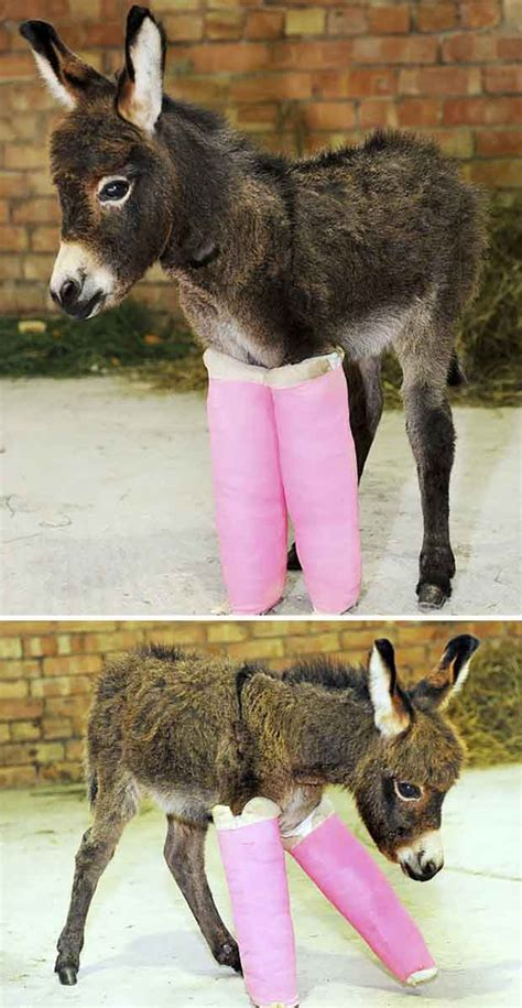 funny cute baby donkeys great inspire