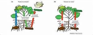 Long distance root–shoot signalling in plant–insect ...