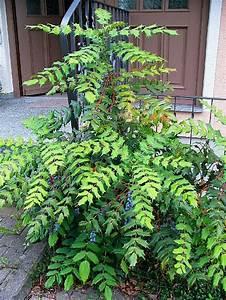 Pflanze Große Blätter : blatt dornig ~ Avissmed.com Haus und Dekorationen