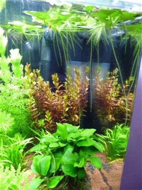 plantes aquarium croissance rapide aquarium nano les plantes poussent 224 vue d oeil paperblog