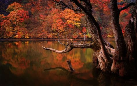 lake fall forest dead trees reflection nature south