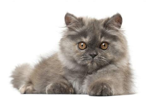 fondos de pantalla  mascotas  whatsapp del  de