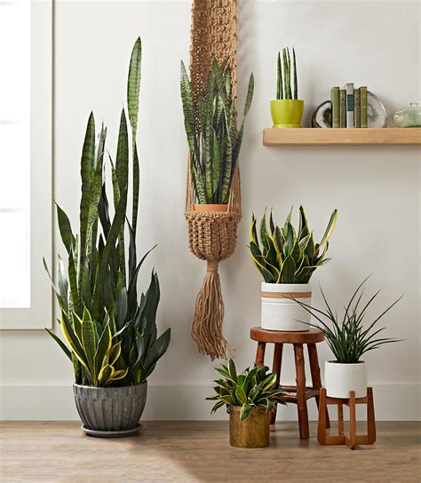 15 Best Houseplants For Bedrooms Better Homes And Gardens