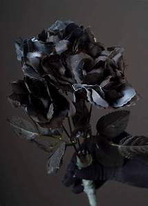 Halloween Party Gothic Black Roses Halloween Party Gothic ...