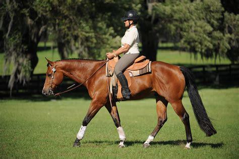 western palm horse dressage quarter lynn horses english pleasure collection florida coast prospects gulf books reach clinic demo trafalgar equine