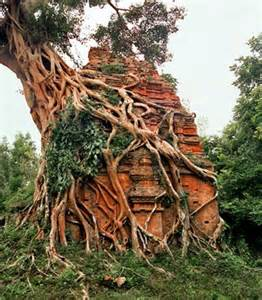 Ancient Cambodian Temple Jungle
