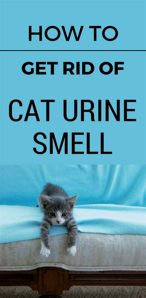 how to make bedroom smell 25 best ideas about cat on cat urine