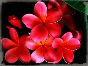 Protector De Pantalla Con Flores Imágenes de Primavera