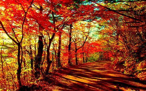 Autumn Wallpapers For Mac by Autumn Forest Mac Wallpaper Allmacwallpaper