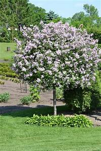 small trees for landscaping Decorative small trees for landscaping