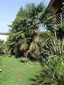 überwintern Von Palmen : berwinterung im gew chshaus von 3 verschiedenen palmen ~ Michelbontemps.com Haus und Dekorationen