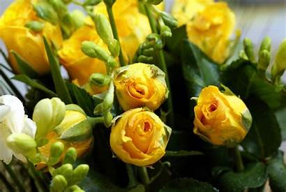 Yellow Roses Rose Flowers Bouquet Wallpapers Meaning