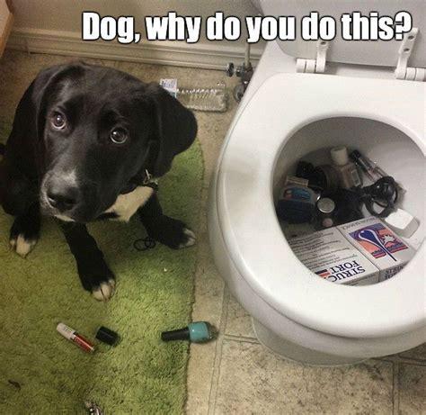 Bad Dog Meme - bad dog meme funny pictures quotes memes jokes