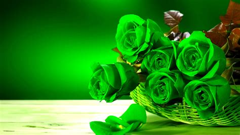 Rose Flower Wallpaper Hd Free Download Green Rose Hd Wallpapers Pictures Of Beautiful Flowers