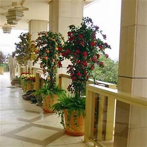 Plante Exterieur Artificielle : plante grimpante interieur ~ Teatrodelosmanantiales.com Idées de Décoration