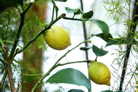 Ciemos Mārtiņa Rītiņa veselīgo augu dārzā: Audzēju to, ko ...