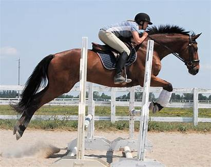 Ottb Jumping Duncan Remaking Clubhouse Jumps Rider