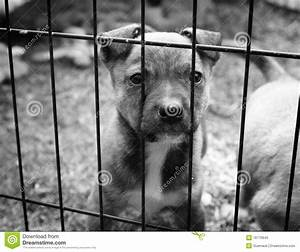 Puppy in a cage stock image. Image of look, stray ...