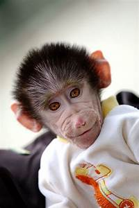 Cute Baby Monkey From Skopje Zoo Gets Treated Like A Child ...