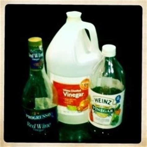vinegar kills fleas  style pinterest fleas  vinegar