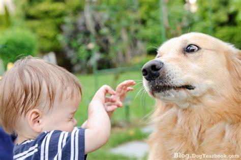 Breednding Dog Yearbook Blog