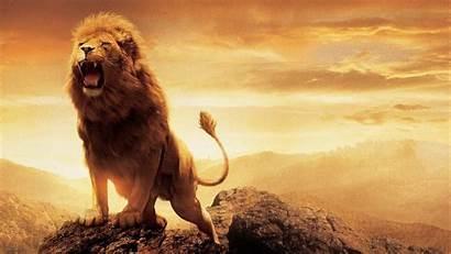 Lion Wallpapers Roaring Aslan Narnia Wallpaperplay Res