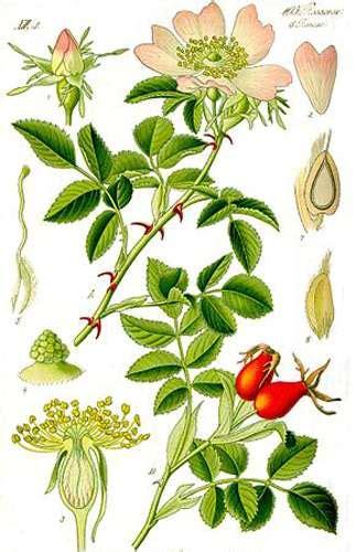 livre de cuisine facile pour tous les jours botanique