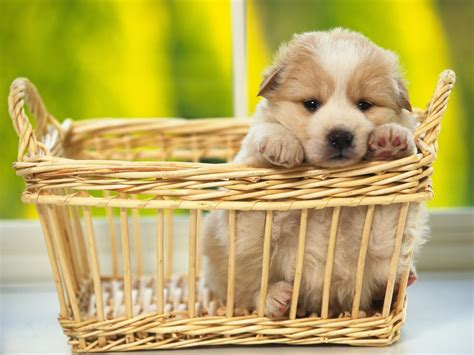 You can also upload and share your favorite cute dog wallpapers. Cute Dogs Wallpapers (61+ images)