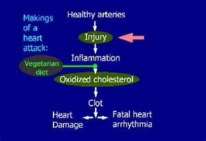 Self Health Guide  Type Of Fatty Acids