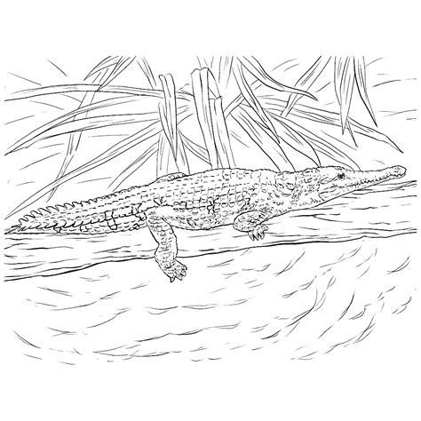 Krrrr Okodil Kleurplaat by Krokodillen Kleurplaten Kleurplatenpagina Nl