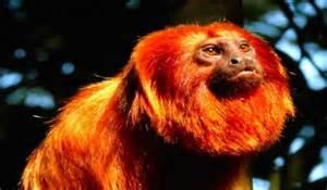 Amazon Rainforest Animals Lion