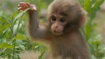 Monkey Monkeys Snow Nature Babies Funny Coffee