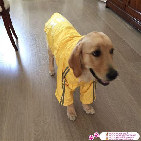 gelben regenjacke  pfoten fuer grosse hunde mit kapuze