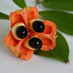Tropische Früchte und exotisches Gemüse genießen