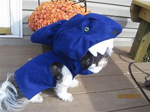 Shark Fin Dog Costume For Dogs BarkShop Dog Beds and Costumes