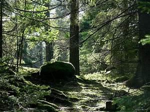 Swedish Nature Wallpaper