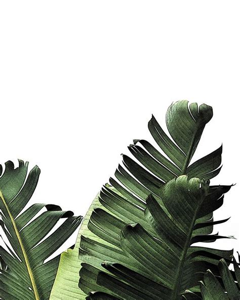 Hunter Green Shower Curtain by 1000 Ideas About Tropical Background On Pinterest