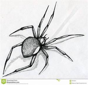 Black Widow Spider Drawing Stock Image - Image: 38726231 ...
