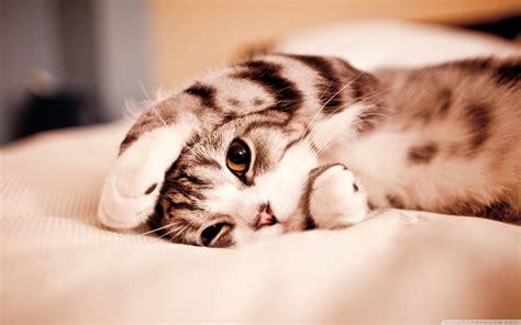 Excellent Cute Cats Wallpapers For Desktop