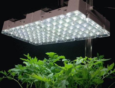hid grow lights 5 reasons led grow lights are better than hid