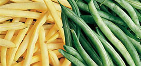 cuisiner des legumes proleg sa cameroun societe de production des legumes