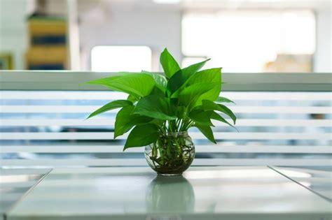 piante ufficio arredare con le piante pollicegreen