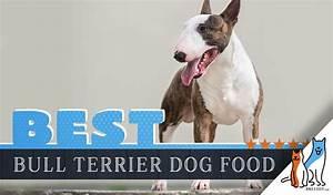 9 Best Bull Terrier Dog Foods Plus Top Brands For Puppies