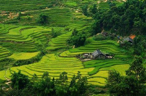 green topas sapa pictures traveler photos of sapa lao cai province