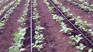 one line drip irrigation acre kit - YouTube