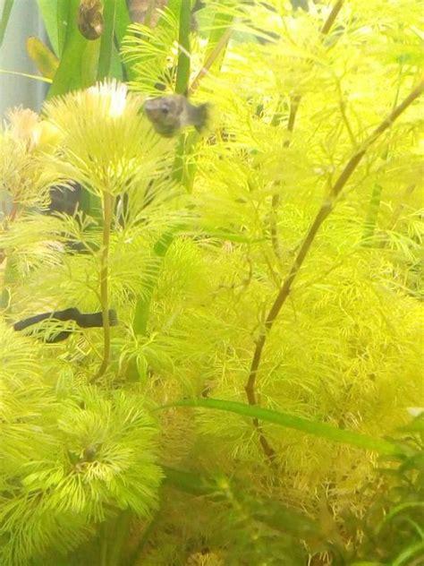 mollys zu verschenken in m 252 nchen fische aquaristik kaufen und verkaufen 252 ber